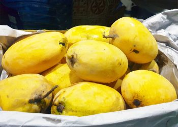 The king of fruit 'Mango' has economic future for Pakistan