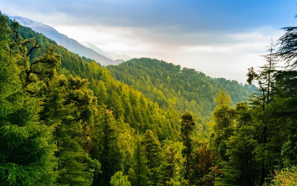 PM launches monsoon tree plantation to regain required forest cover